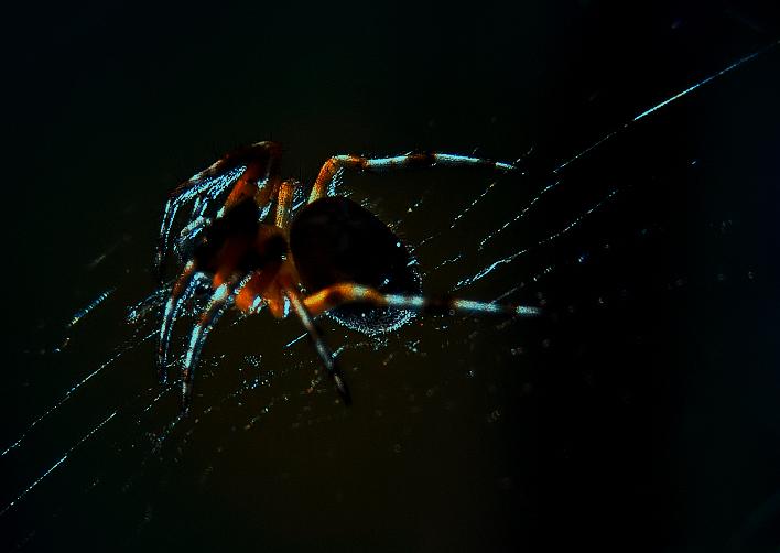 illuminated spider