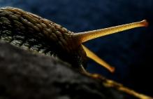 Snail Radiation