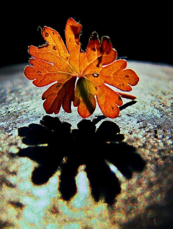 Seasons of Nature -Autumn