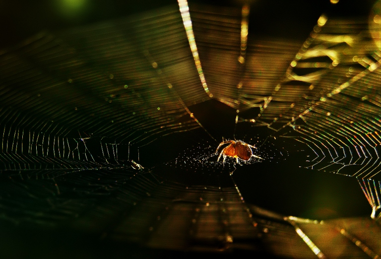 Spider's Dream
