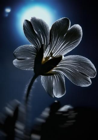 IR Flower ©