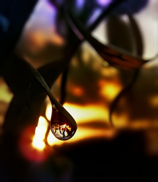 lonely drop (1)