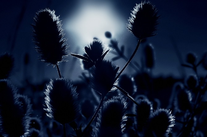 blue silence (1)
