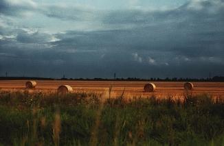 field (2)
