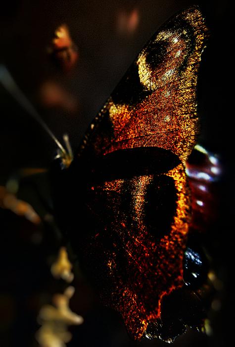 motyl w cieniu (1)