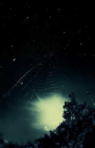 space web (1)