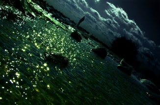 stars fallen down