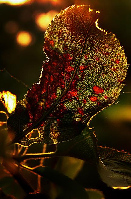 Golden Hour_ (1)