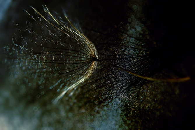 Delicate World  (1)