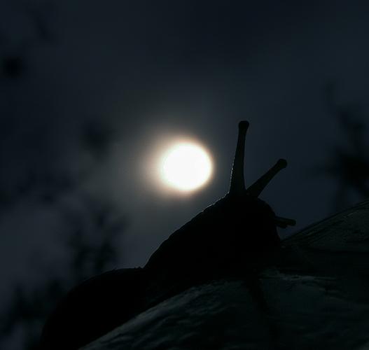 night relax (2)