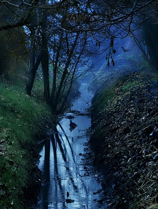 Polish Wilderness (3)