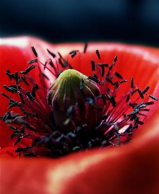 Poppy Life (3)