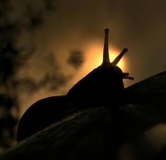 Snail Meditation  (2)