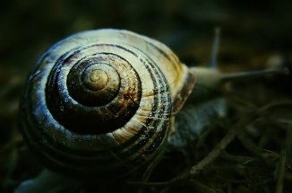 Walk Away Snail (1)v