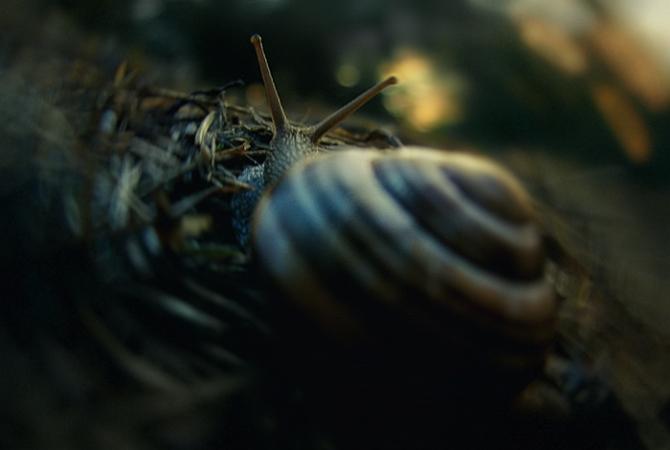 Walk Away Snail (5)y