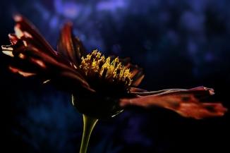 Magic Flower (3)