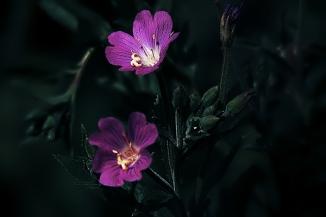 3D Flowers (5)