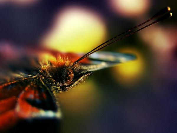 Butterfly Hunter (2)