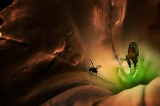 Life inside a Flower  (17)