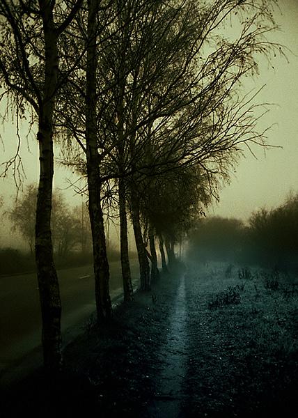 Polish Landscape Mood (3)