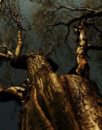 Tree of Hope  (2)