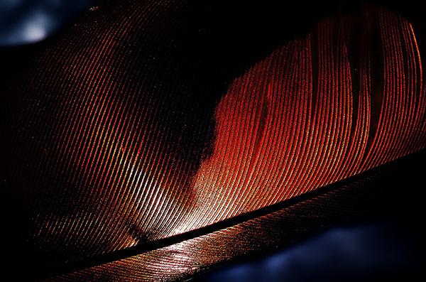 Magic Feather (3)
