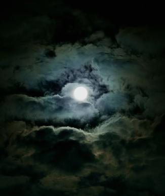 Wolf Night (4)