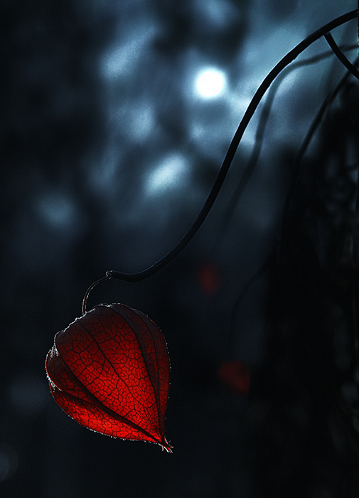 Esprit de Lune © (2)