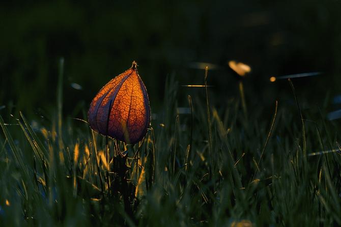 Svetlomet © (2).jpg